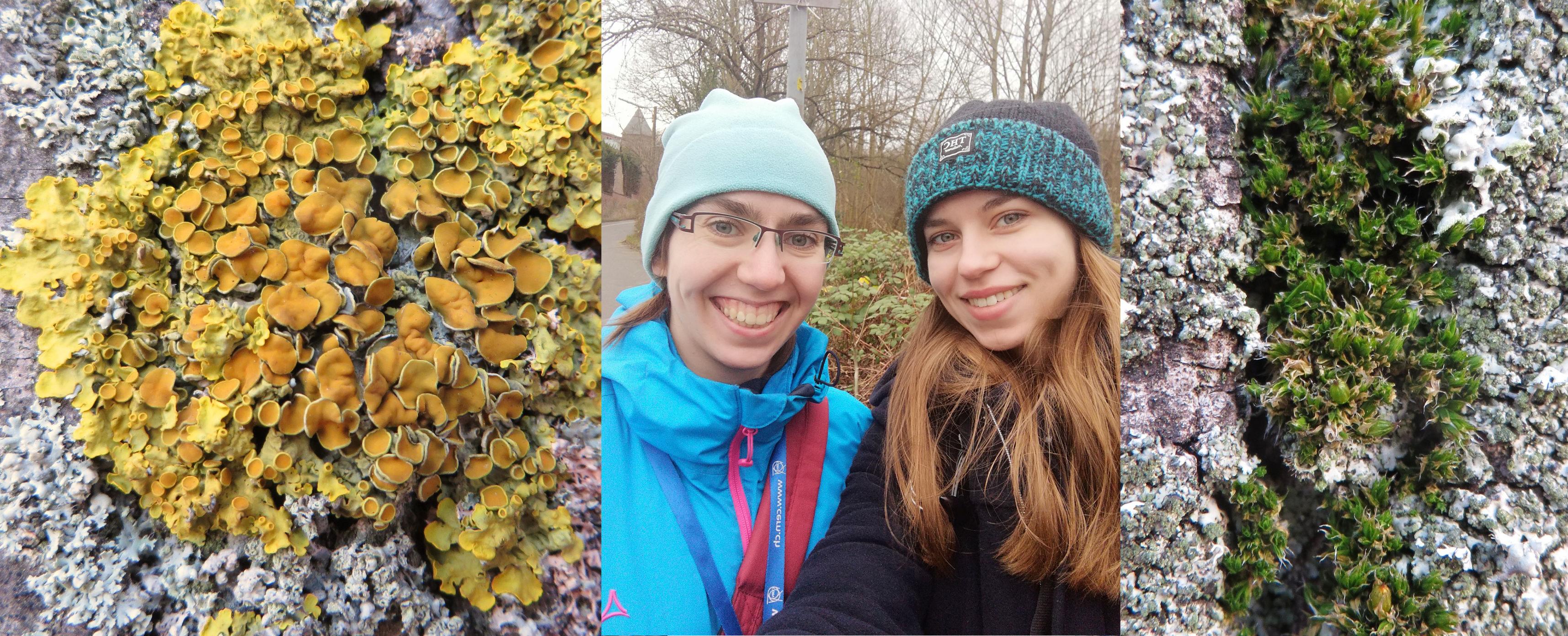 Flechten und Moose zeigen bessere Luft in Bonn an